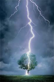 lightning tree family